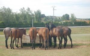 Yeguada_J_Varona_instalaciones23